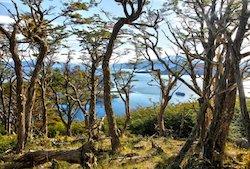 Australis Kreuzfahrt: Wulaia Bucht