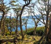 Australis Kreuzfahrten - Besuch der Wulaia Bucht