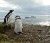 Australis Kreuzfahrten - Pinguine auf Magdalena Island