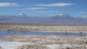 Laguna Chaxa - Salar de Atacama