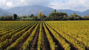 Weingut Viu Manent Chile