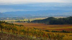 Weingut Neyen Chile