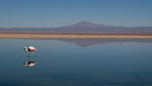 Flamingo Atacama Salzsee