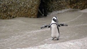 Magellan - Pinguin