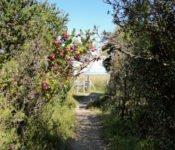Nationalpark Chiloé - Weg zum Strand