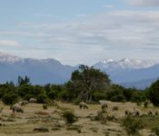 Cordillere Patagonisches Eisfeld