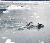 Delfine Alsina Gletscher