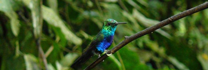 Kolibri Ecuador - Von eime Höhepunkt zum nächsten