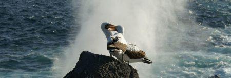 Albatrosse - Bewertung bei Trustpilot