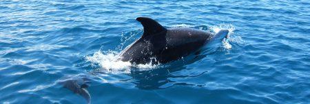 Galapagos Kreuzfahrt mit Jack Grove