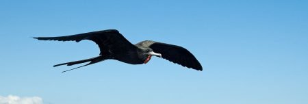 Sonderangebote Galapagos Kreuzfahrten