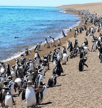 Península Valdez - Pinguine