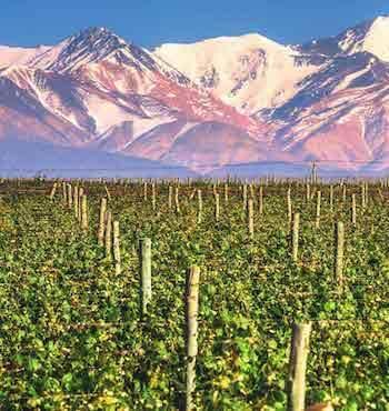 Valle del Uco - Mendoza