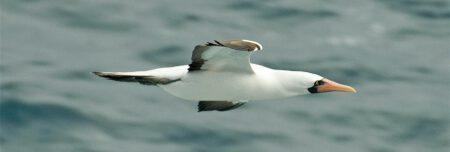 Galapagos Kreuzfahrt Angelito ein Traum